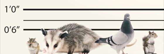 animal-lineup_jpeg